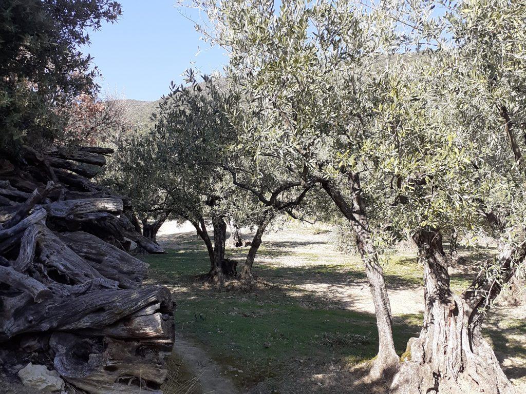 oliveraie Nyons
